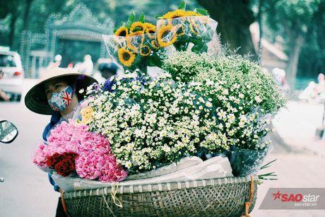Ha Noi dau dong - mua hen cung cuc hoa mi - Anh 2