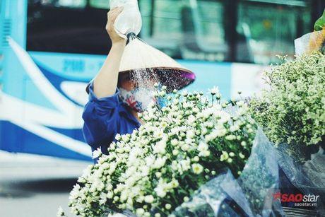 Ha Noi dau dong - mua hen cung cuc hoa mi - Anh 3