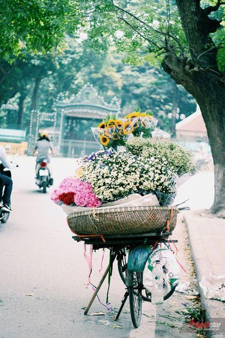 Ha Noi dau dong - mua hen cung cuc hoa mi - Anh 4