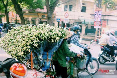 Ha Noi dau dong - mua hen cung cuc hoa mi - Anh 7