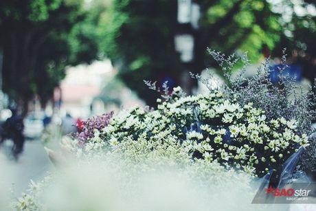 Ha Noi dau dong - mua hen cung cuc hoa mi - Anh 8