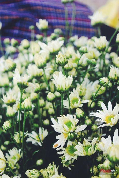 Ha Noi dau dong - mua hen cung cuc hoa mi - Anh 9