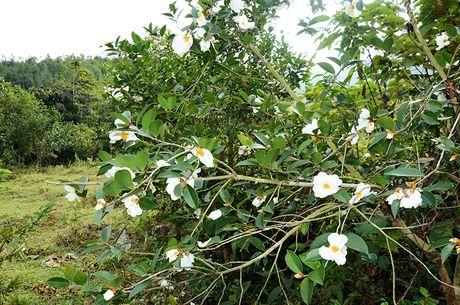 Le hoi hoa So Binh Lieu se dien ra trong 2 ngay 10-11/12 - Anh 1