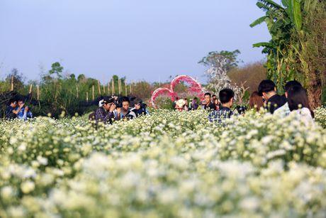Thieu nu Ha thanh 'do sac' cung hoa cuc hoa mi - Anh 1