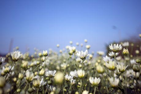 Thieu nu Ha thanh 'do sac' cung hoa cuc hoa mi - Anh 2