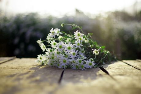 Thieu nu Ha thanh 'do sac' cung hoa cuc hoa mi - Anh 5