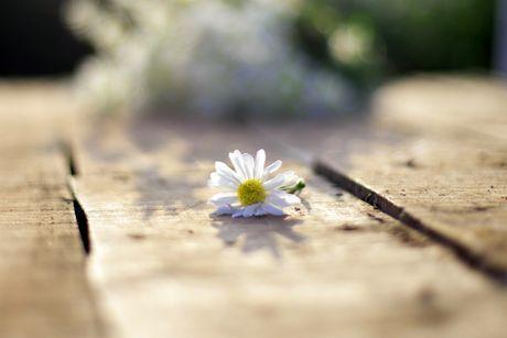 Thieu nu Ha thanh 'do sac' cung hoa cuc hoa mi - Anh 6