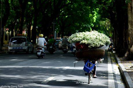 Cuc hoa mi ve tren pho Ha Noi - Anh 2