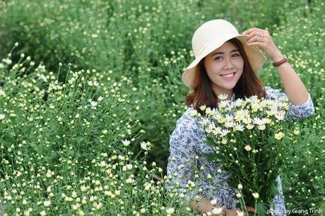 Cuc hoa mi ve tren pho Ha Noi - Anh 3