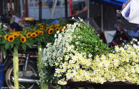 Cuc hoa mi ve tren pho Ha Noi - Anh 5