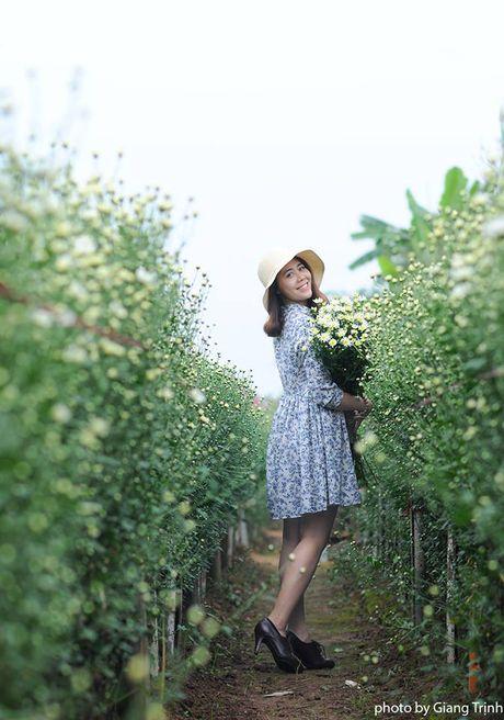 Cuc hoa mi ve tren pho Ha Noi - Anh 6