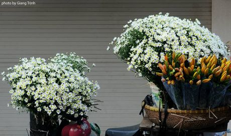 Cuc hoa mi ve tren pho Ha Noi - Anh 7