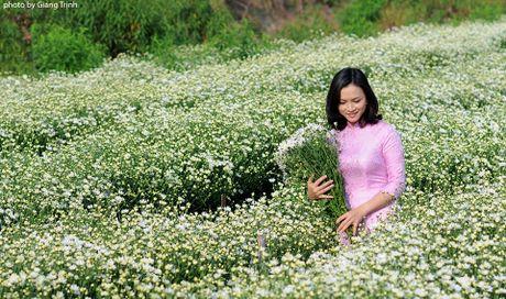Cuc hoa mi ve tren pho Ha Noi - Anh 8