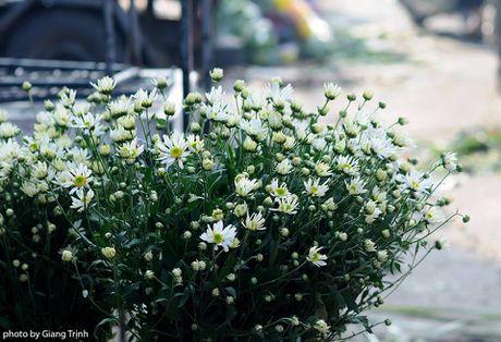 Cuc hoa mi ve tren pho Ha Noi - Anh 9