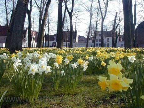 Bruges - thanh pho co tich cua chau Au - Anh 6