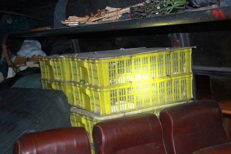 Xe khach Bac - Nam 'xep' 120 con ran ho mang nam chung voi khach - Anh 1