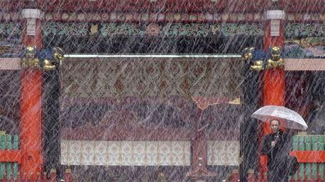 Tokyo hung tuyet roi thang 11 lan dau trong 54 nam - Anh 1