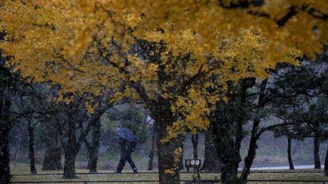 Tokyo hung tuyet roi thang 11 lan dau trong 54 nam - Anh 2