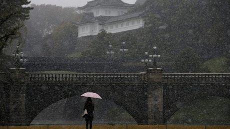 Tokyo hung tuyet roi thang 11 lan dau trong 54 nam - Anh 4