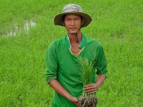 Nong dan 'dien' tro thanh chu thuong hieu gao sach - Anh 1