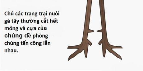 Diem 10 su kien thu vi lien quan den nhung chu ga tay dip le Ta On - Anh 8