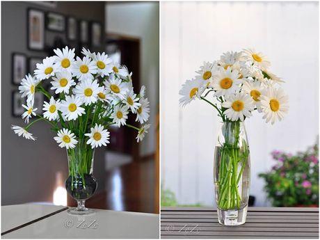 Nhung cach cam hoa cuc hoa mi dep diu dang - Anh 4