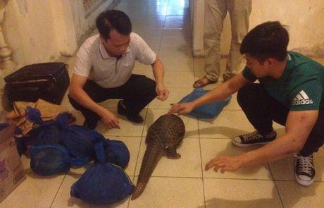 Ninh Binh: Bat phu nu van chuyen trai phep 7 ca the te te - Anh 1