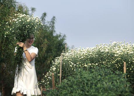 Cuc hoa mi no ro tu vuon ra pho - Anh 10
