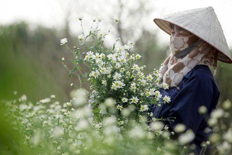 Cuc hoa mi no ro tu vuon ra pho - Anh 4