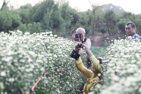 Cuc hoa mi no ro tu vuon ra pho - Anh 8