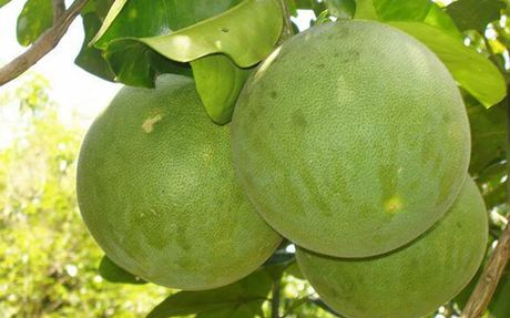 Cac loai thuc pham giau vitamin A co the ban chua biet - Anh 8