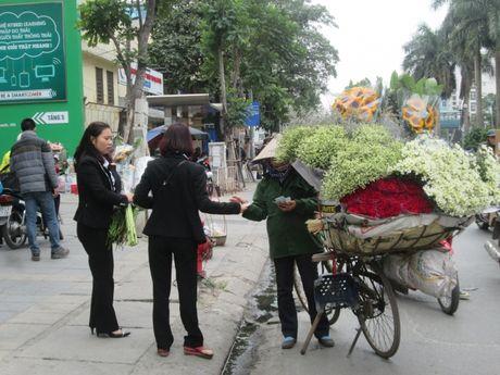 Cuc hoa mi ngap tran tren cac tuyen pho Ha Noi - Anh 10