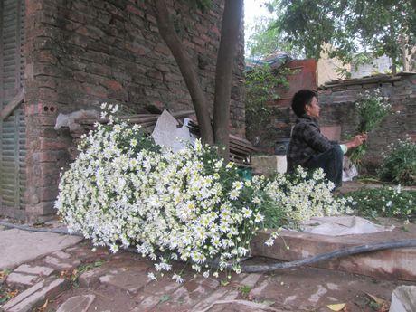 Cuc hoa mi ngap tran tren cac tuyen pho Ha Noi - Anh 2