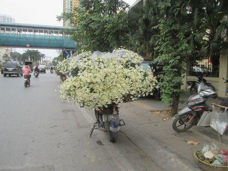 Cuc hoa mi ngap tran tren cac tuyen pho Ha Noi - Anh 4
