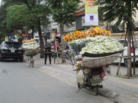 Cuc hoa mi ngap tran tren cac tuyen pho Ha Noi - Anh 9