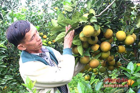 Yen Thanh khong che dien tich cam khoang 350 ha de bao ve chat luong - Anh 2