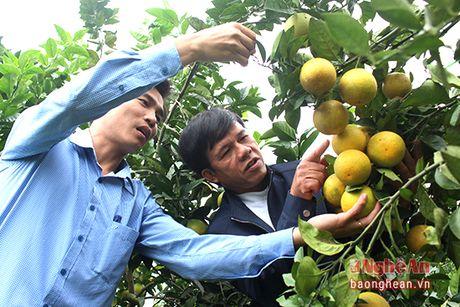 Yen Thanh khong che dien tich cam khoang 350 ha de bao ve chat luong - Anh 4