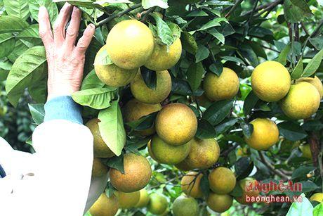 Yen Thanh khong che dien tich cam khoang 350 ha de bao ve chat luong - Anh 5