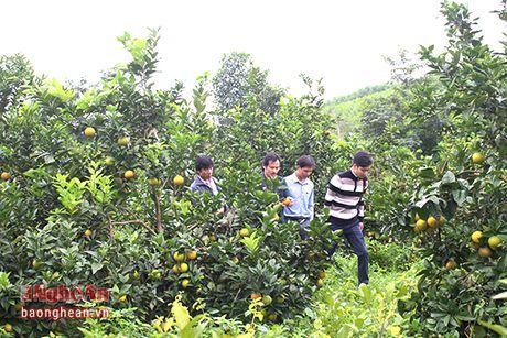 Yen Thanh khong che dien tich cam khoang 350 ha de bao ve chat luong - Anh 7