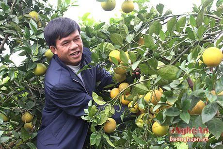 Yen Thanh khong che dien tich cam khoang 350 ha de bao ve chat luong - Anh 8