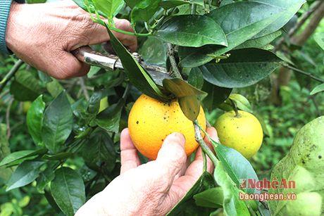 Yen Thanh khong che dien tich cam khoang 350 ha de bao ve chat luong - Anh 9