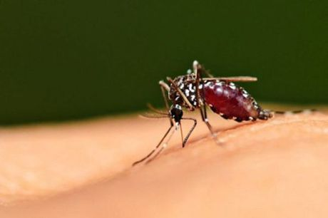 Phat hien truong hop nhiem Zika dau tien tai Tay Ninh - Anh 1