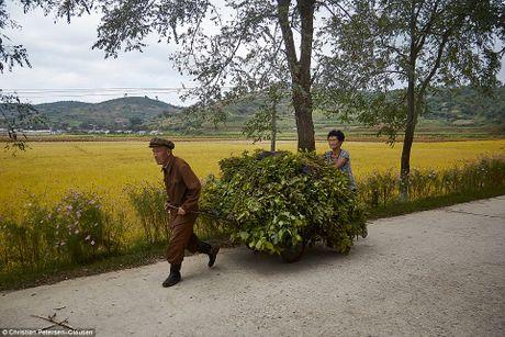 Can canh gioi thuong luu tai Trieu Tien - Anh 12