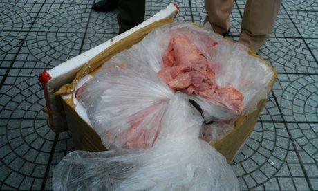Thua Thien – Hue: Phat hien 1300kg noi tang dong vat khong ro nguon goc - Anh 2