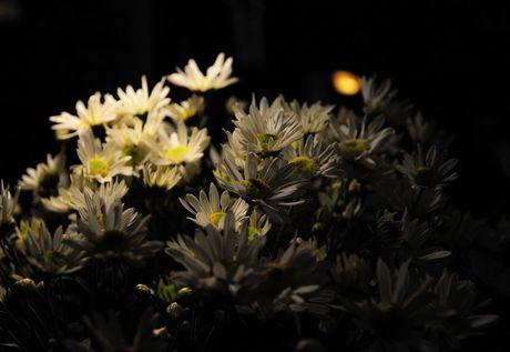 Cuc hoa mi dep nao long trong gio lanh dau dong - Anh 10