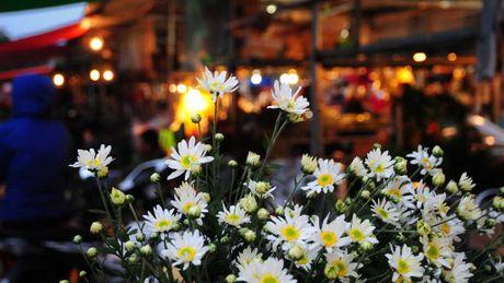 Cuc hoa mi dep nao long trong gio lanh dau dong - Anh 1