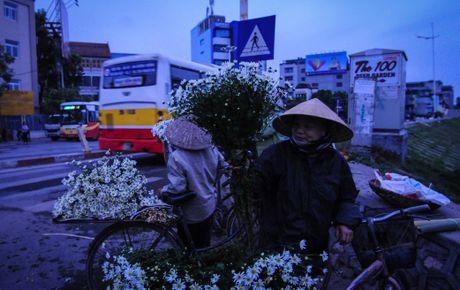 Cuc hoa mi dep nao long trong gio lanh dau dong - Anh 2