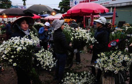 Cuc hoa mi dep nao long trong gio lanh dau dong - Anh 5