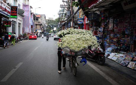 Cuc hoa mi dep nao long trong gio lanh dau dong - Anh 7