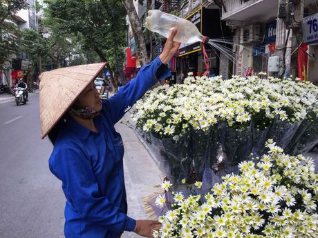 Cuc hoa mi dep nao long trong gio lanh dau dong - Anh 8